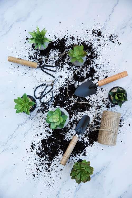 Messy Indoor Gardening Photo
