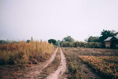 Grassy Farm Track Photo