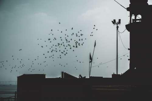 Flock Of Birds Silhouette Photo