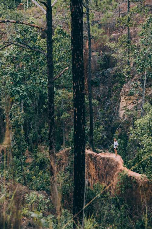 Lone Hiker Standing In A Forest Photo