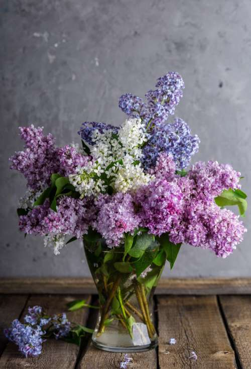 Close up of Lilac flowers in a glass vase