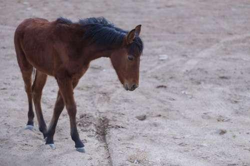 animal desert - one horse