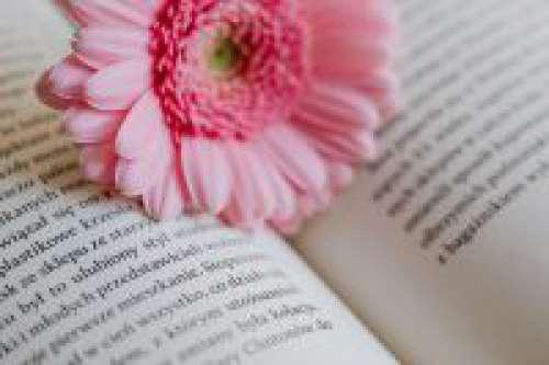 Gerbera & Book