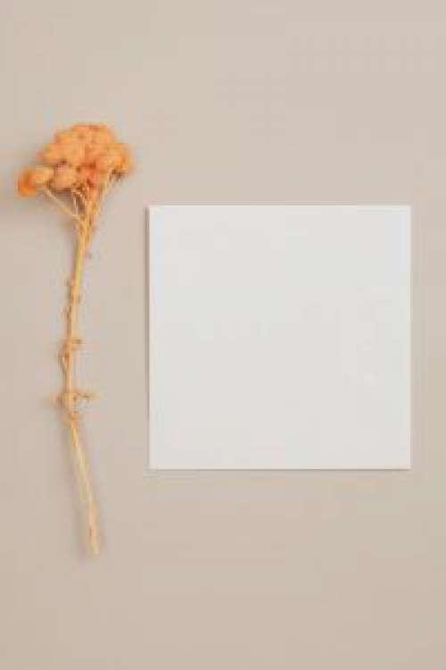 Orange dry flowers