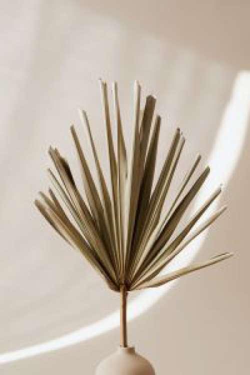 Neutral Palm