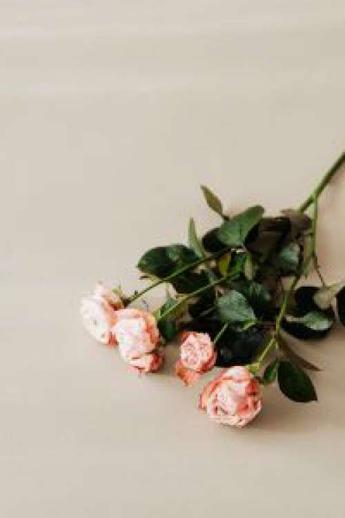 Bombastic rose