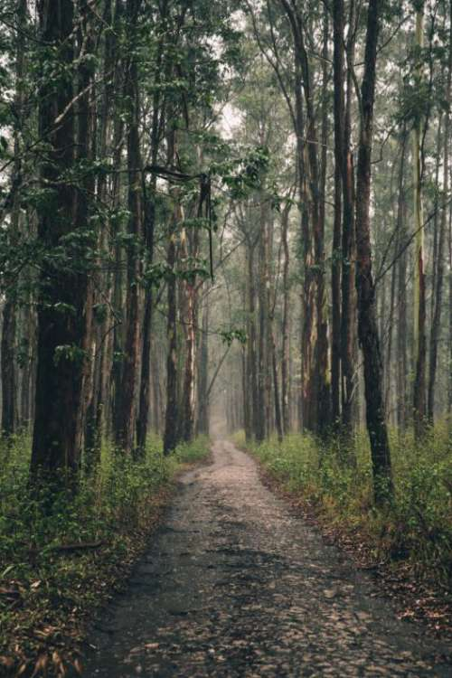 Forest Hiking Path Free Photo