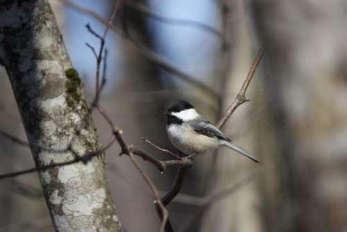 Bird Tree Free Photo