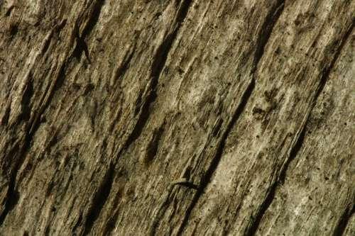Weathered logs