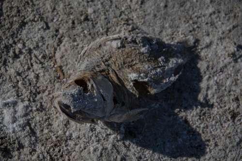 Dead Fish Die-Off Salton Sea