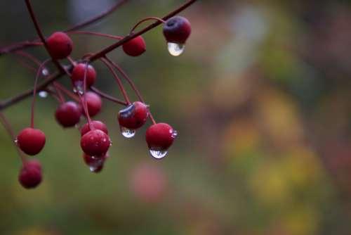 rain drops nature plant berry