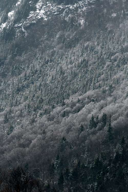 snow forest trees winter cold
