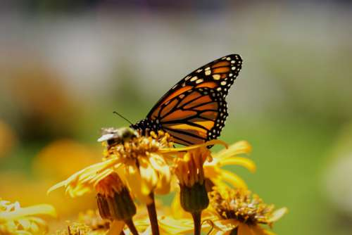 butterfly insect garden summer detail
