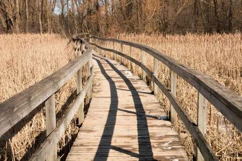 Wooden Path Through Field Photo