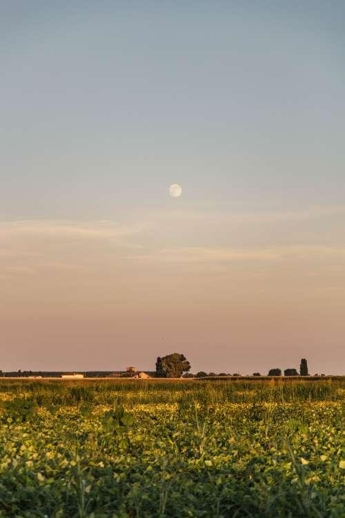 Pastel Moon Photo