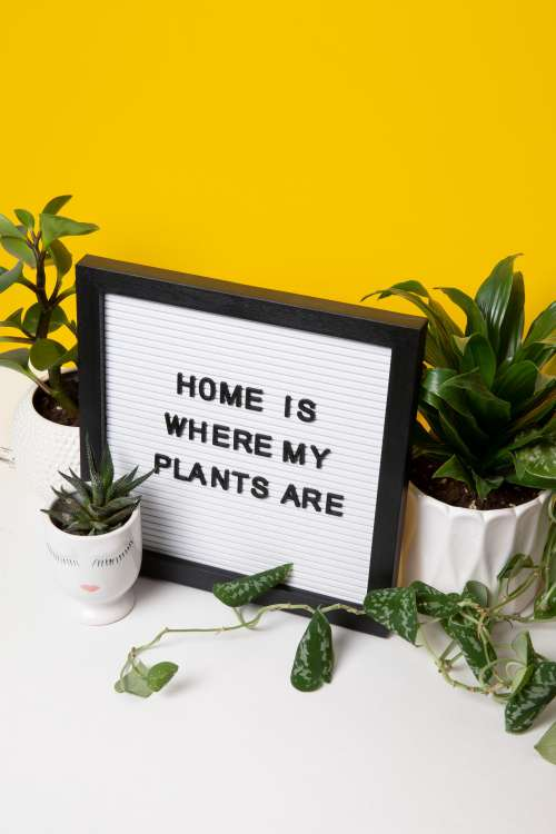 Home Is Where My Plants Are Photo