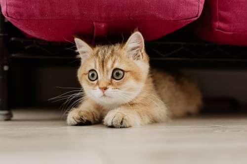 Scared Kitty Hiding Photo