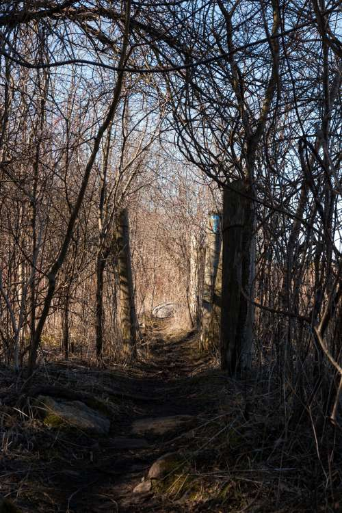A Pathway Through The Woods Photo
