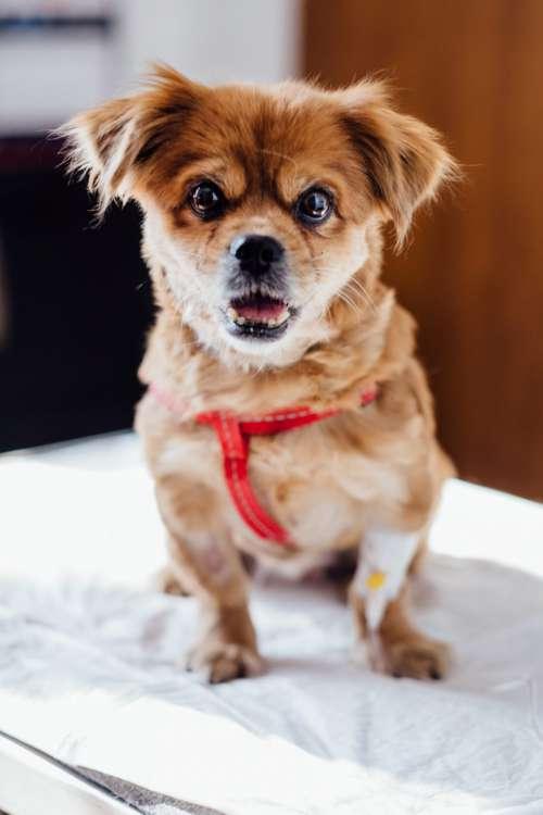 A dog at the vet 3