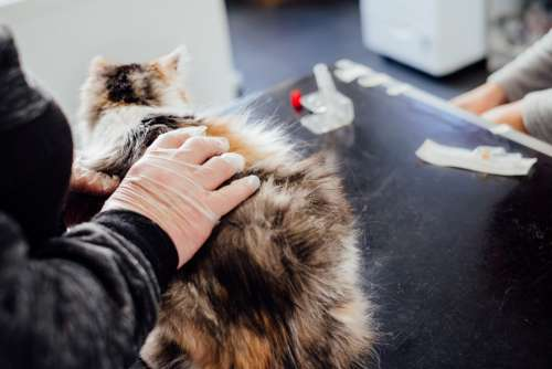 A cat at the vet
