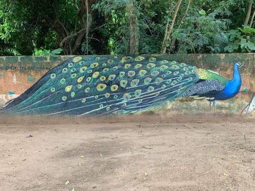 street art, graffiti, mural, painting wall, peacock, tree, nature, art, urban art