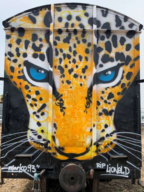 painted cheetah face, graffiti, street art, color, wall painting, urban art, city, illustration, graphic, craft, effet graff, visual art, train, subway