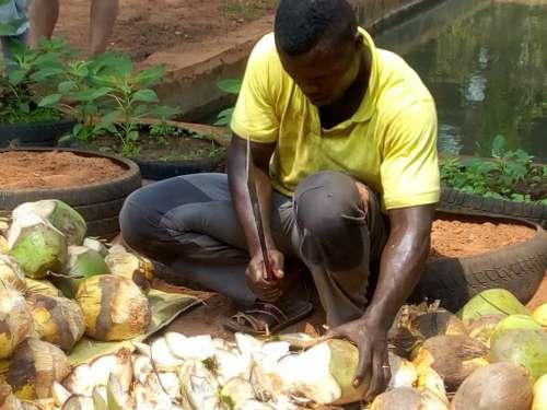 food, people, fruit, environment, farming, man, farm, coconut, sale, drink, work