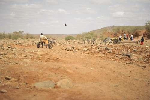 man, travel, horse, landscape, walk, desert, means of transport,