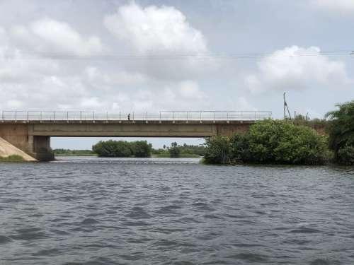 salt river, mangrove, ecotourism, trees, environment, nature, ecology, bridge, flora