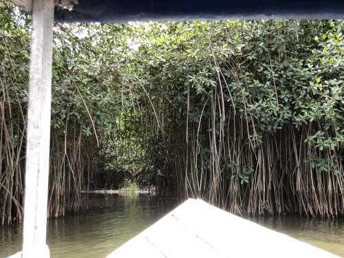 salt lake, river, mangrove, ecotourism, trees, environment, nature, ecology, boat