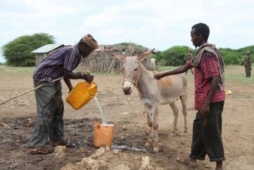 men, shepherds, breeders, water, drink, horse, donkey, animals, rural area, countryside, village