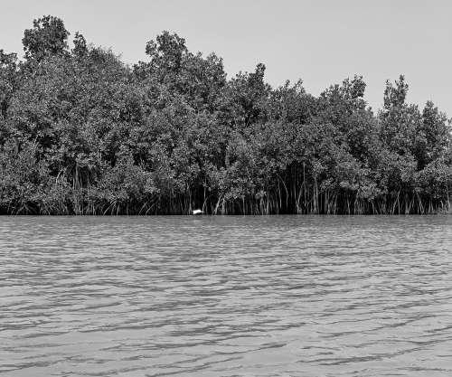 trees, lake, landscape, river, nature, environment, mangrove, flora, vegetal, black and white