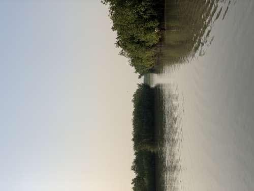 water, environment, nature, tree, lake, river, mangrove, flora