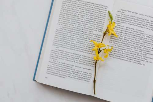 Book & spring flowers