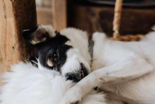 Sleepy cute dog