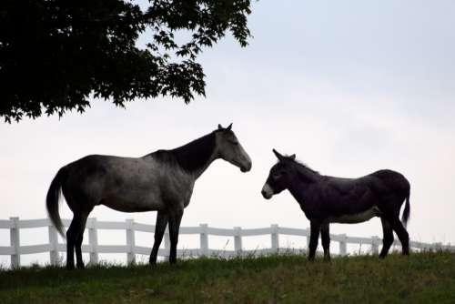 horses pasture fence grazing equine