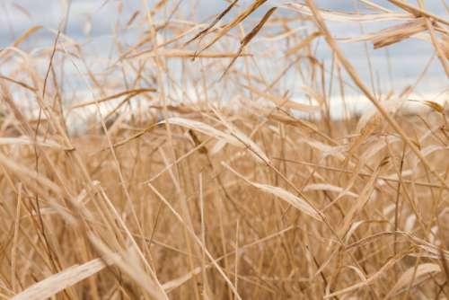 Dead Grass Field Photo