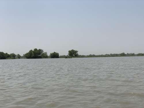 lake, river, landscape, nature, environment, trees, mangrove
