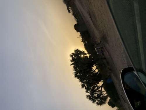 landscape, road trip, travel, street, sunset, sunshine, dawn, nature, trees