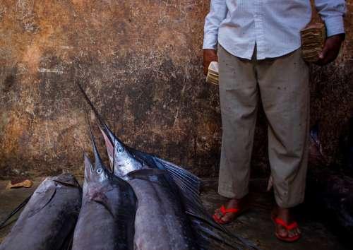 people, customer, salesman, merchant, big fish, animal, seafood, market, fishermen, trade