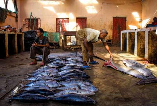 people, men, market, fish, work, fresh fish, food, animals, fishmonger, gestural, customers, fishers
