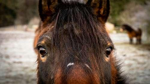 horse portrait face eyes animal