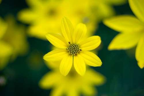yellow flower nature garden spring