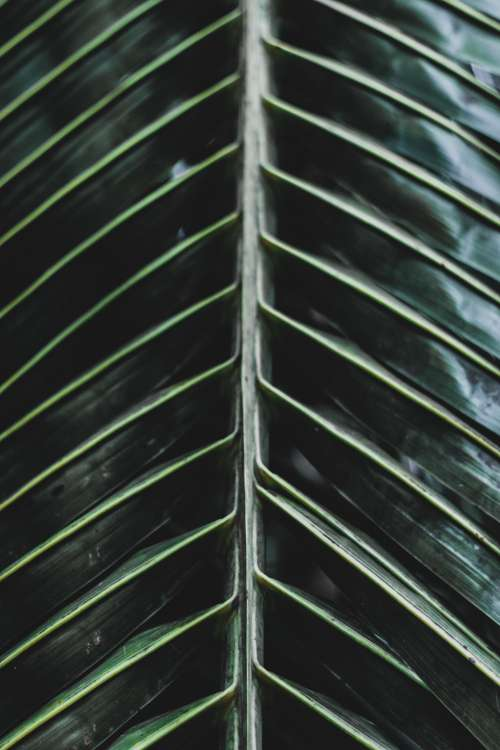 Close Up Showing Detail In Leaf Photo