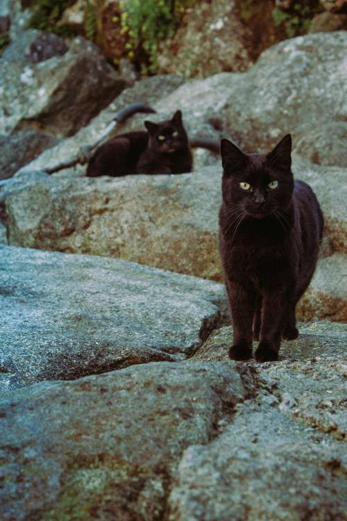 Two Black Cats On The Rocks Photo
