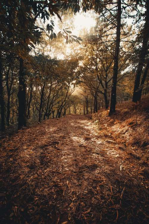 Fallen Leaves On Forest Path Photo