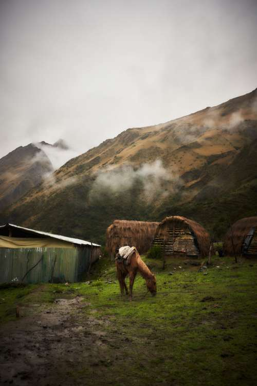 Horse Grazes In Front Of Cloudy Mountains Photo