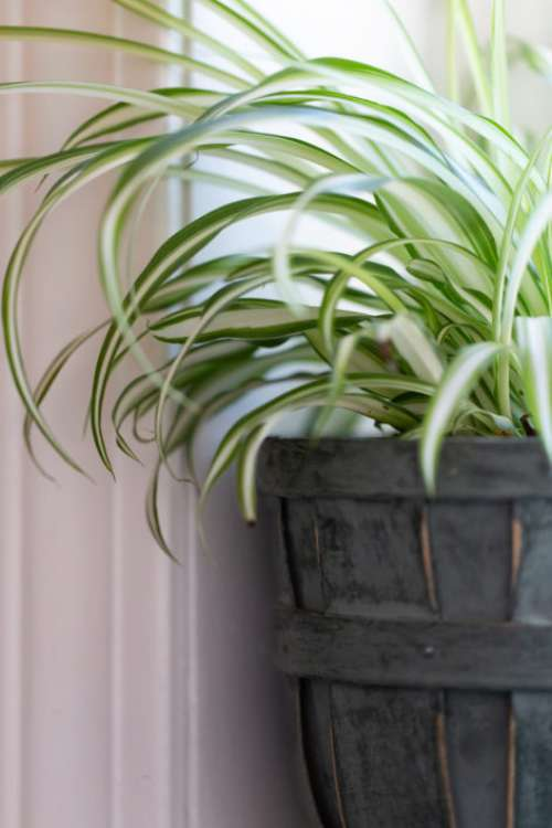 House Plant Free Photo