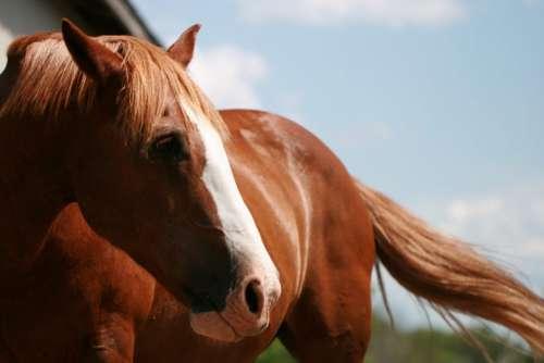 Horse Sunny Free Photo