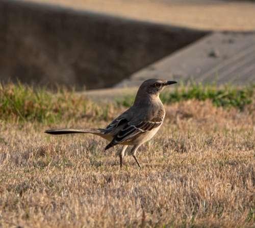 Bird Wildlife Free Photo